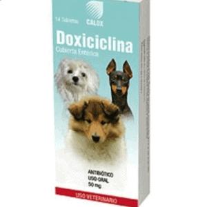 Doxiciclina para perros