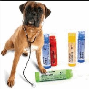 Homeopatia para perros 2