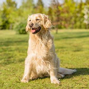 Parásitos en perros