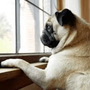 Qué es la ansiedad por separación en los perros