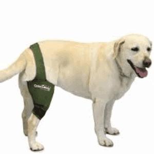 Artrosis en los perros