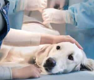 perro enfermo 1 opt 1